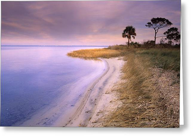 Beach Along Saint Josephs Bay Florida Greeting Card by Tim Fitzharris