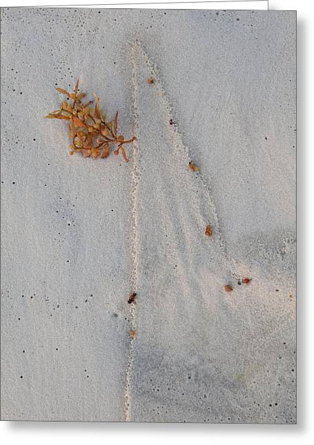 Greeting Card featuring the photograph Beach Art I by Charles Warren