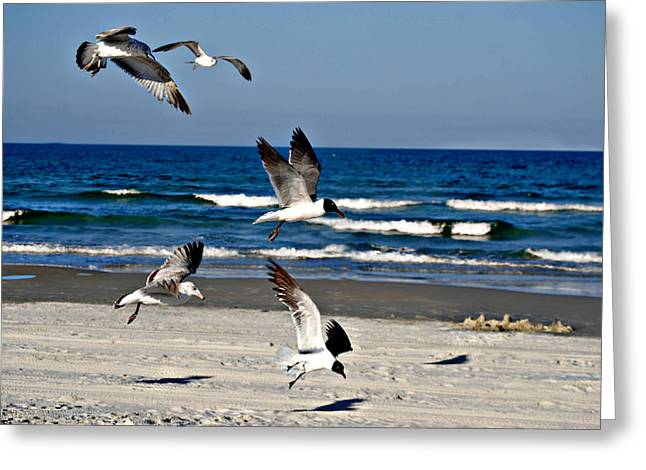 Beach Birds In Play Greeting Card by Nicole Hutchison