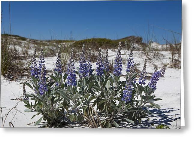 Beach Flora Greeting Card by Charles Warren