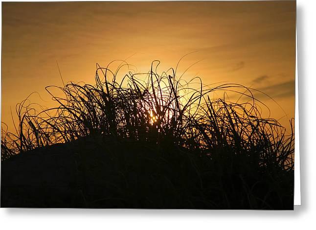 Beach Grass At Sunrise Greeting Card by Steven Ainsworth