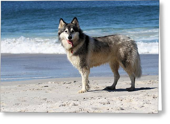 Beach Husky Greeting Card