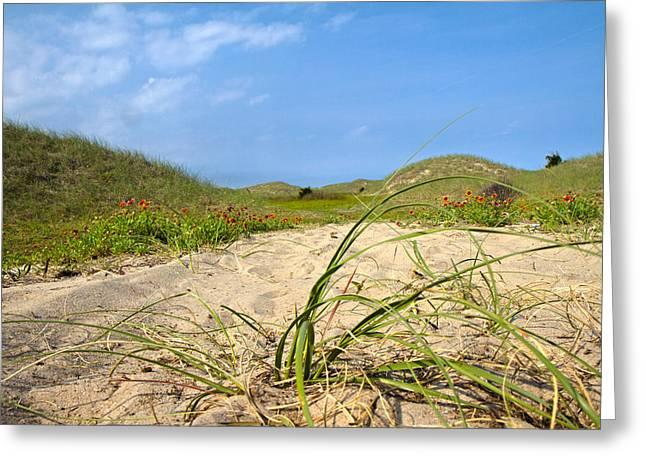 Beach Path Greeting Card by Betsy Knapp