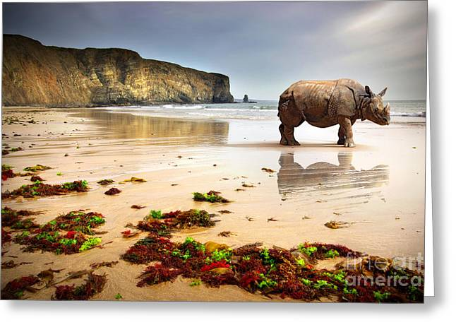 Beach Rhino Greeting Card by Carlos Caetano