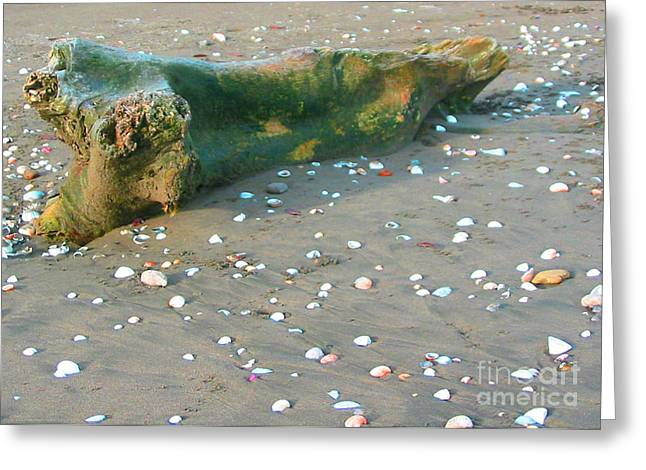 Beachcombing Greeting Card