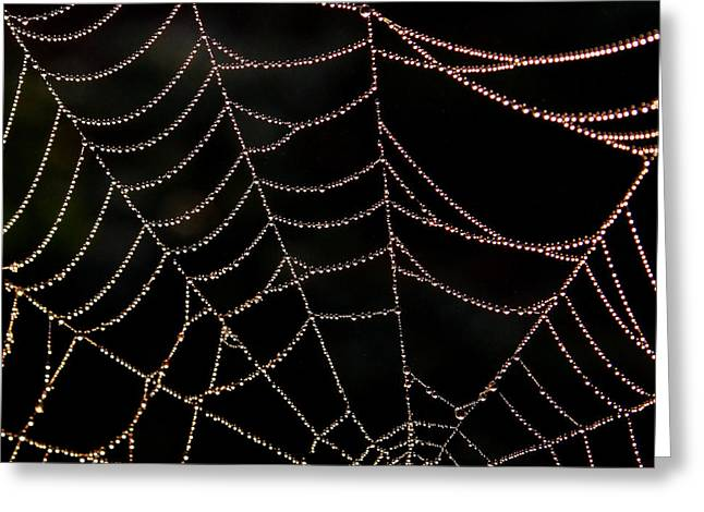 Greeting Card featuring the photograph Beaded Beauty by Karen Harrison