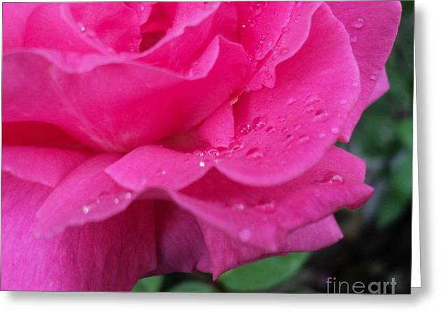 Beaded Pink Rose Petals Greeting Card by Padre Art