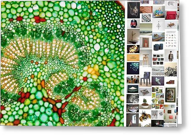 Beads Of Green Greeting Card by Holley Jacobs