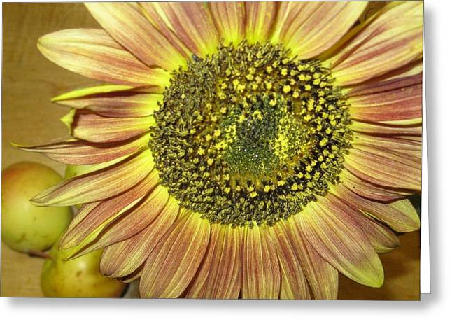 Beaming Sunflower Greeting Card by Tracy Fallstrom
