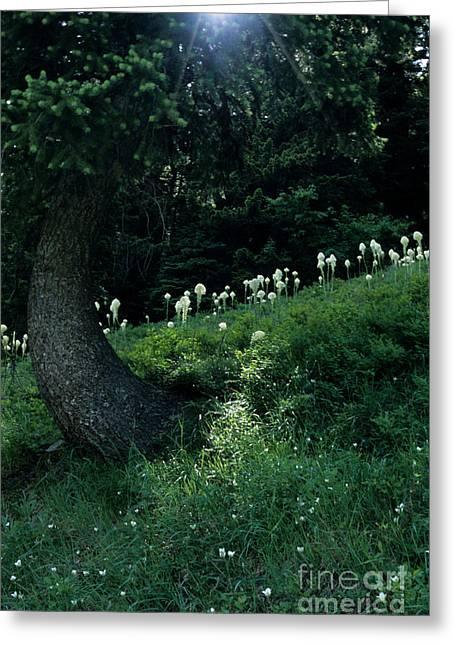 Bear-grass Ridge II Greeting Card by Sharon Elliott