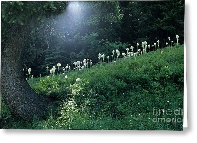 Bear-grass Ridge Greeting Card by Sharon Elliott