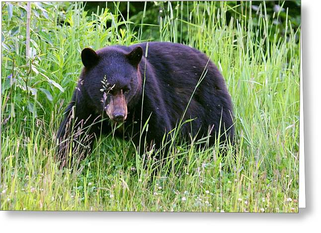 Greeting Card featuring the photograph Bear On The Hillside by Myrna Bradshaw