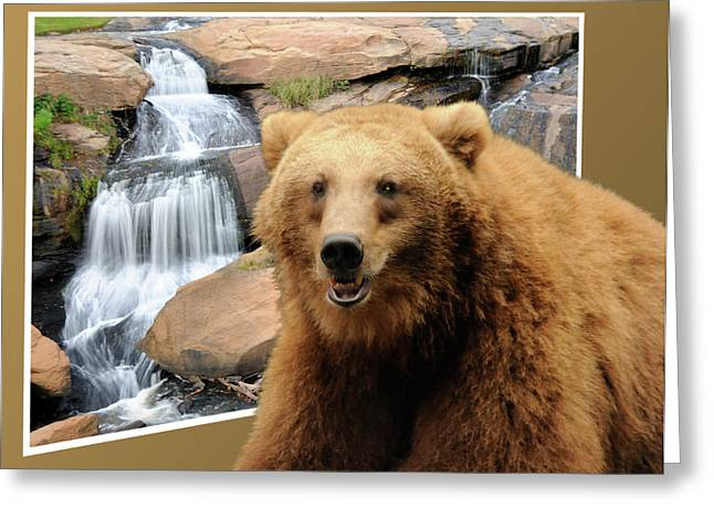 Bear Out Of Frame Greeting Card