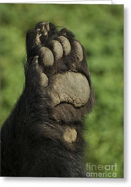 Bear Paw Greeting Card by Jenny May