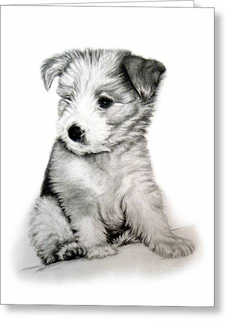 Bearded Collie Pup Greeting Card by Michelle Harrington