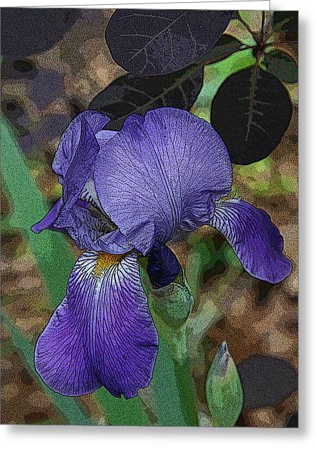 Greeting Card featuring the photograph Bearded Iris by Michael Friedman
