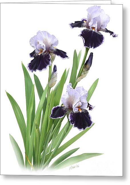 Bearded Iris Trio Greeting Card