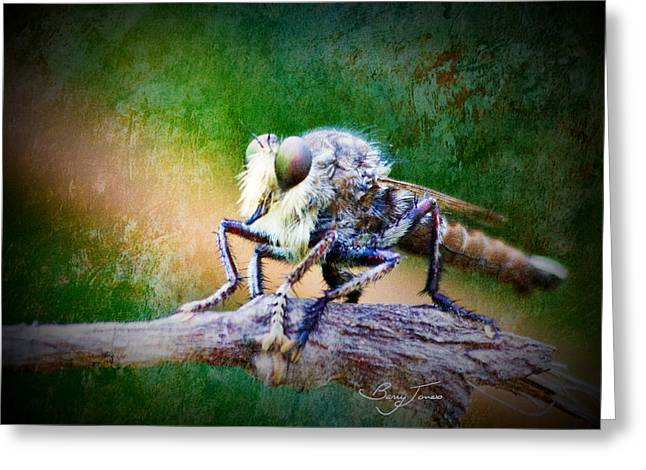 Bearded Robber Fly Greeting Card by Barry Jones