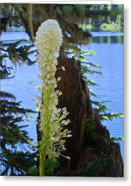 beargrass and Stump Greeting Card