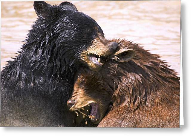 Bears In Water Greeting Card by Carson Ganci