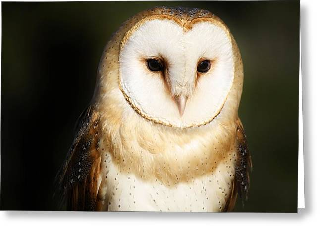 Beautiful Barn Owl Greeting Card by Paulette Thomas