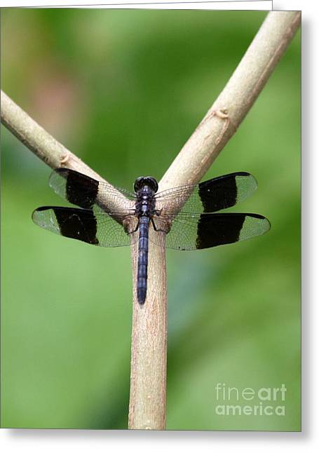 Beautiful Dragonfly Greeting Card by Sabrina L Ryan
