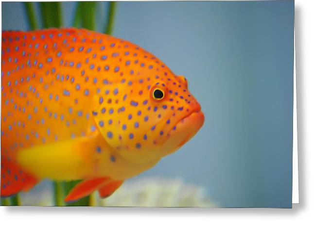 Beautiful Fish Greeting Card by Michael Krahl