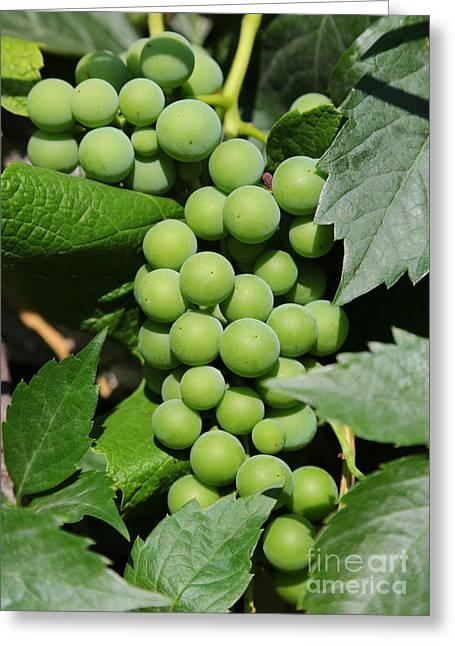 Beautiful Grapes Greeting Card by Carol Groenen