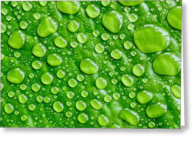 Beautiful Green Leaf With  Water Drops Greeting Card by Chatuporn Sornlampoo