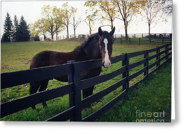 Beautiful Horse In Pasture Nature Landscape Greeting Card
