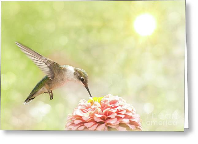 Beautiful Hummingbird Greeting Card
