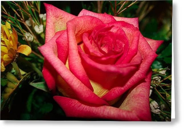 Beautiful Rose Greeting Card by David Alexander