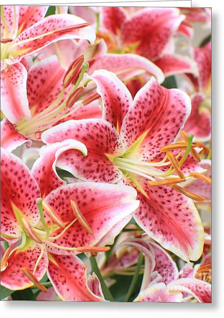 Beautiful Stargazer Lily Greeting Card