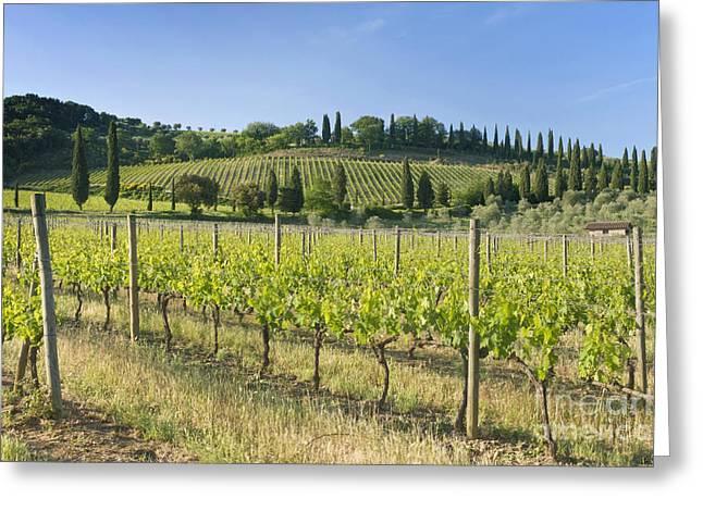 Beautiful Vineyard Greeting Card by Rob Tilley