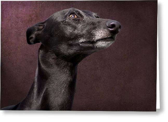 Greeting Card featuring the photograph Beautiful Whippet Dog by Ethiriel  Photography