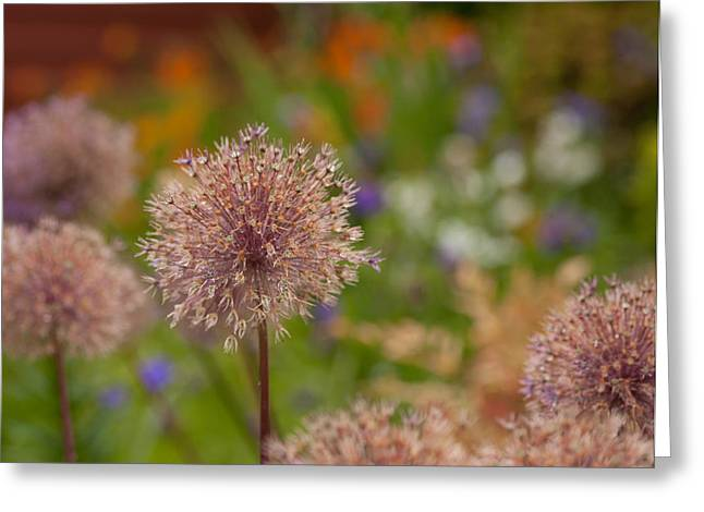 Beauty Clusters Greeting Card by Mike Reid