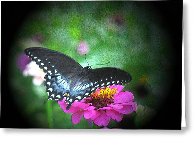 Beauty Greeting Card by Donna Brown