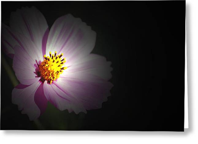 Greeting Card featuring the photograph Beauty In Darkness by Amee Cave