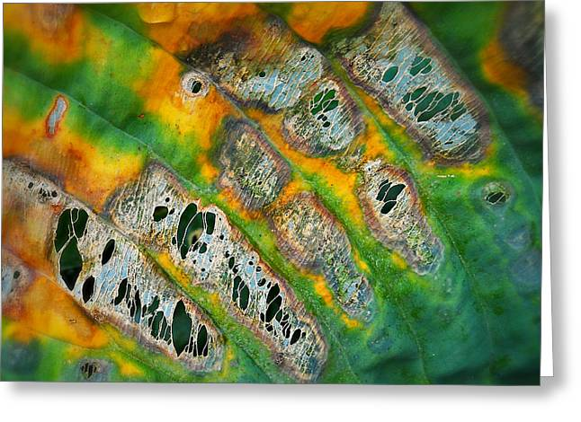 Beauty In Decay Greeting Card by Paul Causie