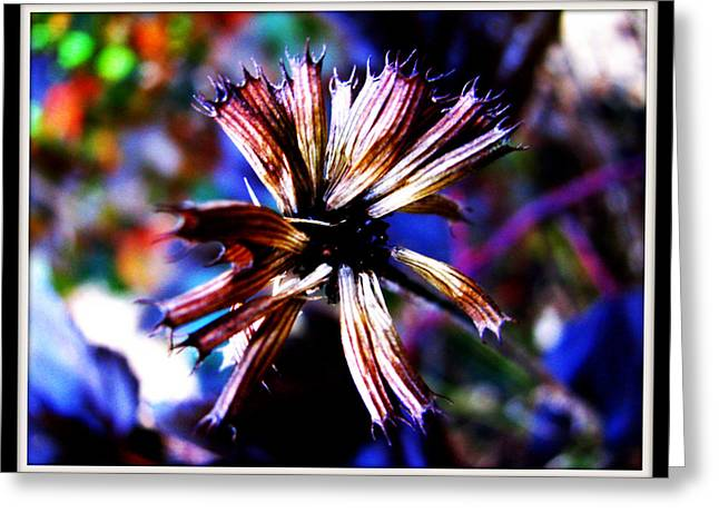 Beauty In Leftovers Greeting Card by Janet Backhaus