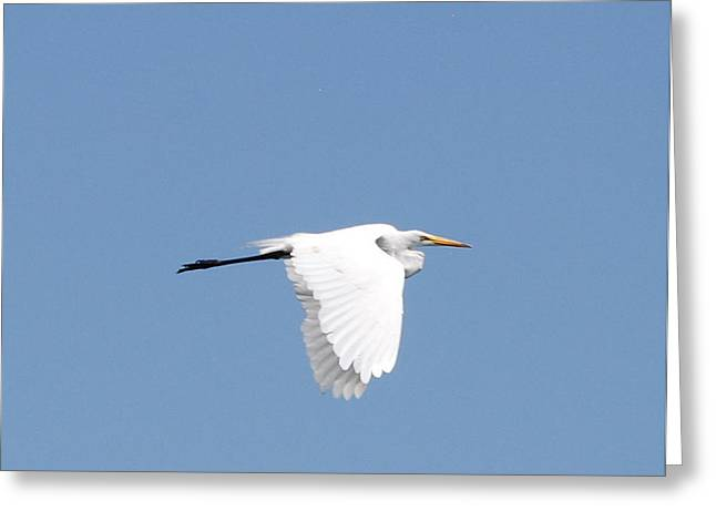 Beauty In Motion Greeting Card by Linda Larson