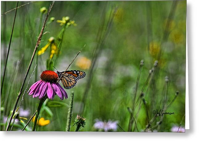 Beauty In The Grassland Greeting Card by Jeff Swanson