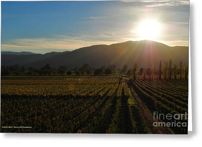 Beauty In The Vineyards Greeting Card