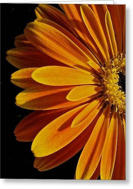 Beauty Greeting Card by Jyotsna Chandra
