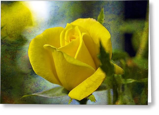 Beauty Of A Yellow Rose Greeting Card by J Larry Walker