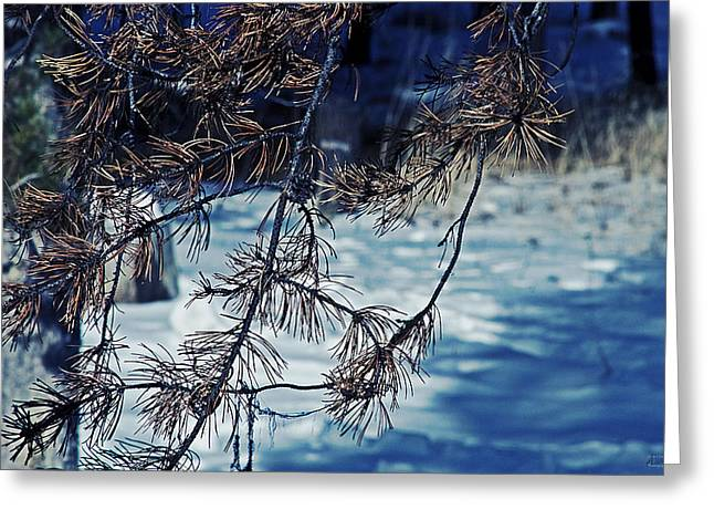 Greeting Card featuring the photograph Beauty Of Simplicity by Janie Johnson