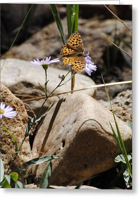 Beauty On The Rocks Greeting Card by Meagan Suedkamp