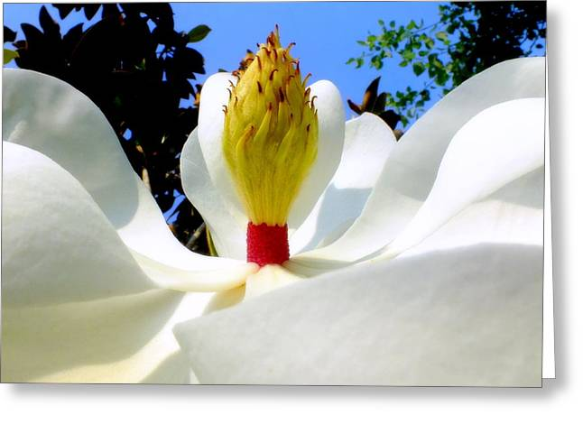 Bed Of Magnolia Greeting Card by Karen Wiles