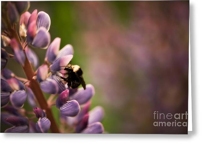 Bee And Lupine Greeting Card by Venetta Archer