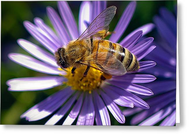 Greeting Card featuring the photograph Bee by Anna Rumiantseva